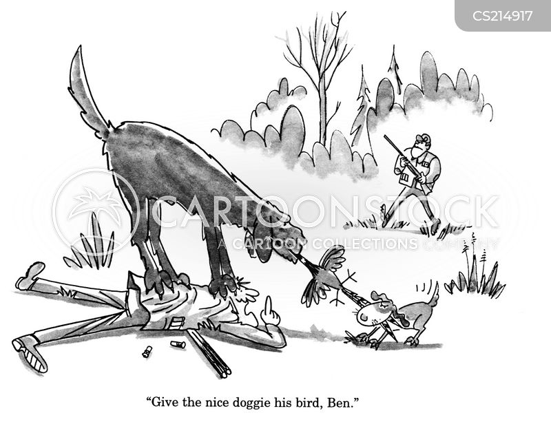game bird cartoons and comics   funny pictures from