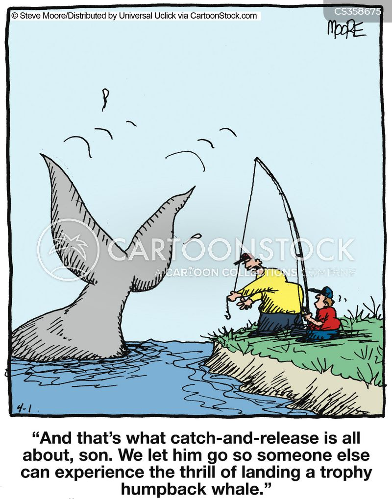 Humpback Whale Cartoons And Comics Funny Pictures From