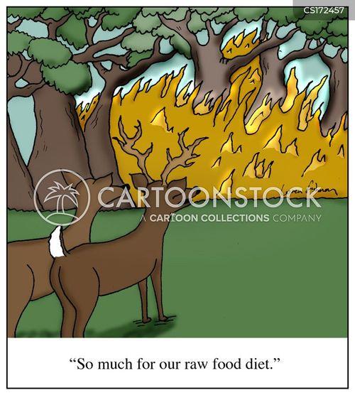 Running Raw Food Diet