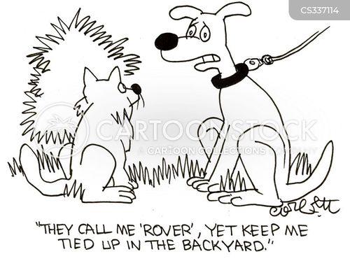 Cat Dog Cartoon They Keep Me On A Lead