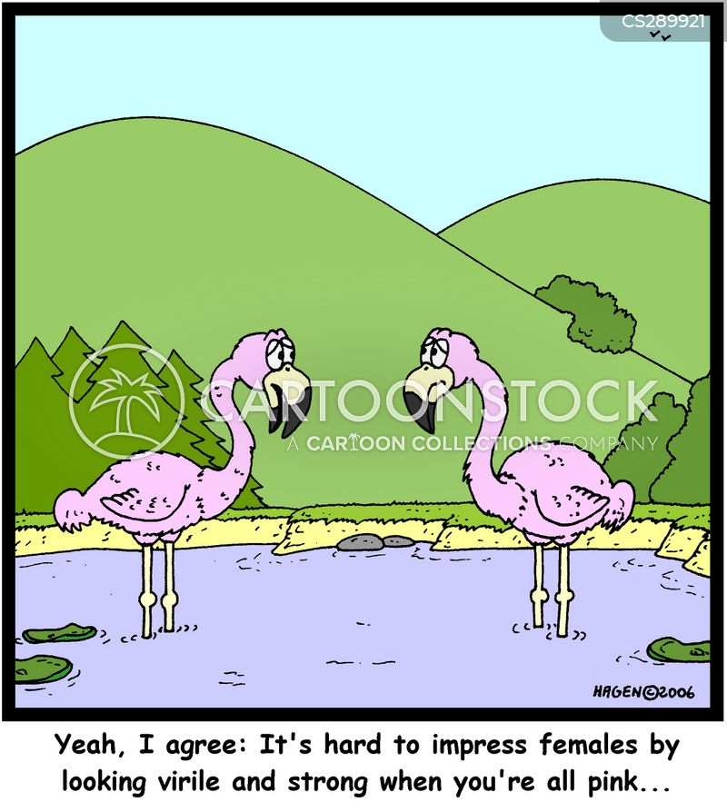 Flamingo Cartoons and Comics - funny pictures from ... - photo#15