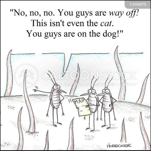 flea cartoons and comics funny pictures from cartoonstock