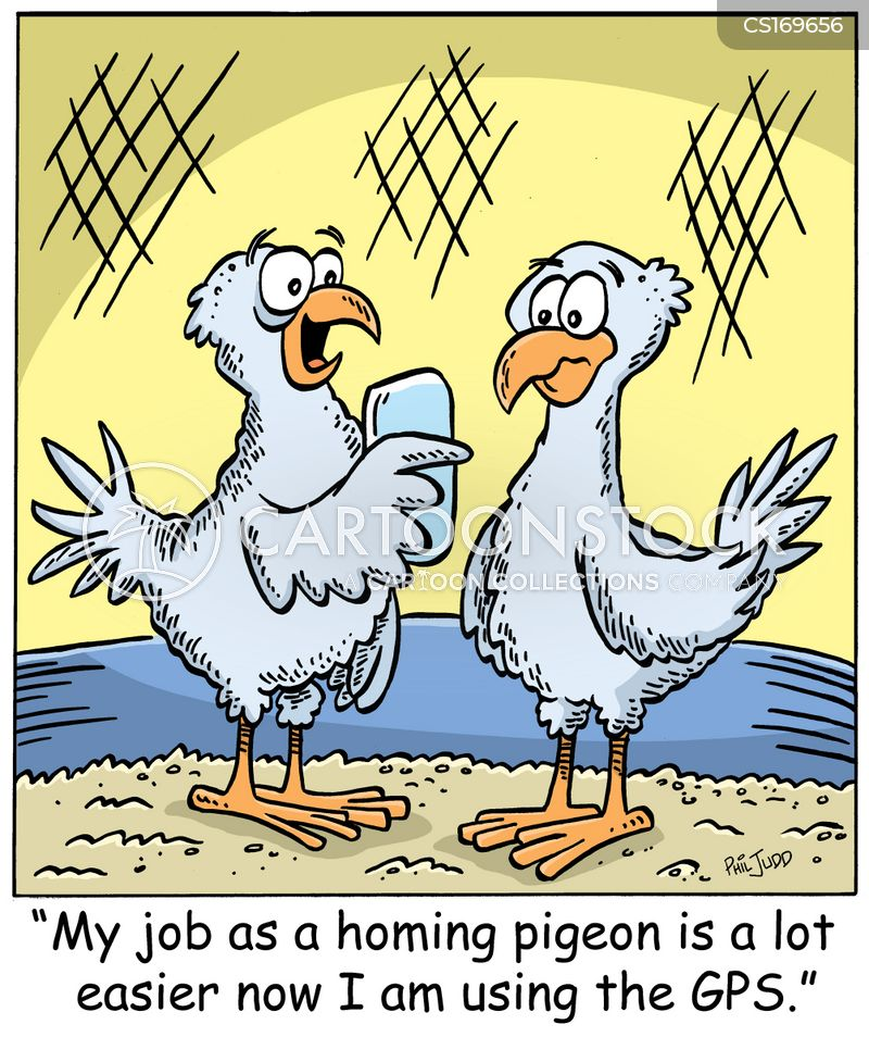 Carrier Pigeon Cartoons And Comics Funny Pictures From
