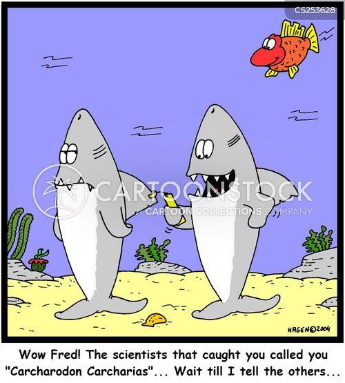name funny cartoons - photo #49