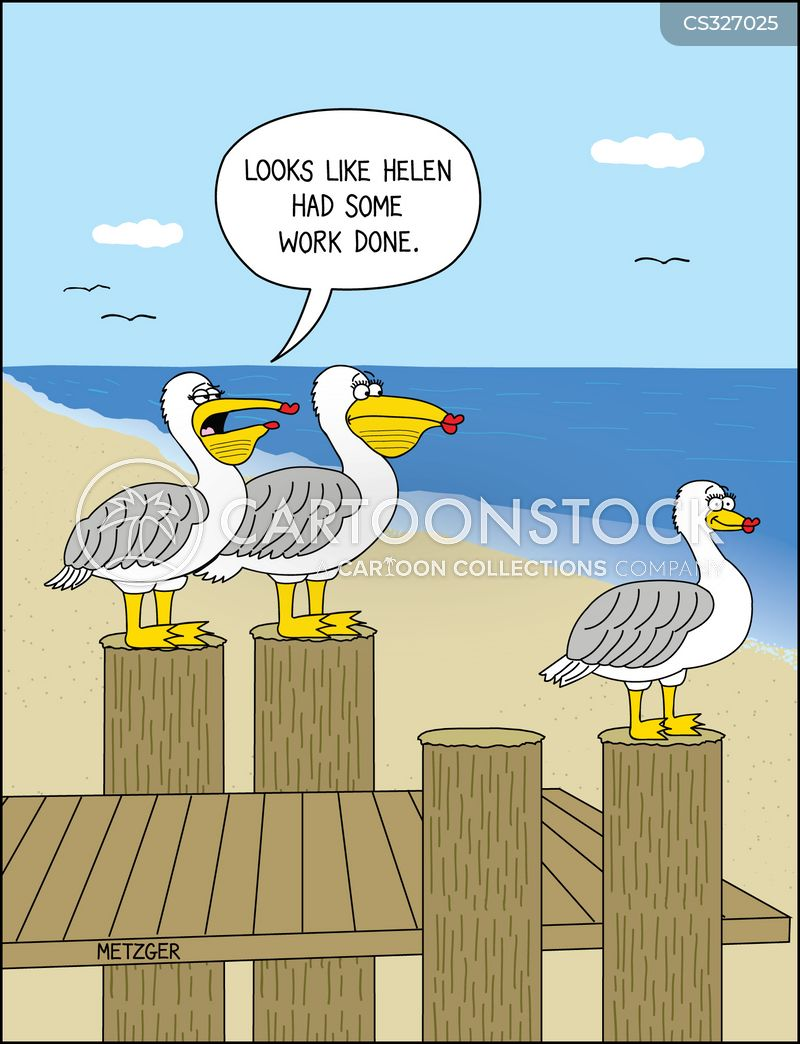 Pelican Cartoons and Comics - funny pictures from CartoonStock