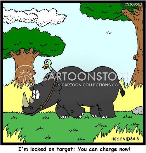 rhino and bird symbiotic relationship