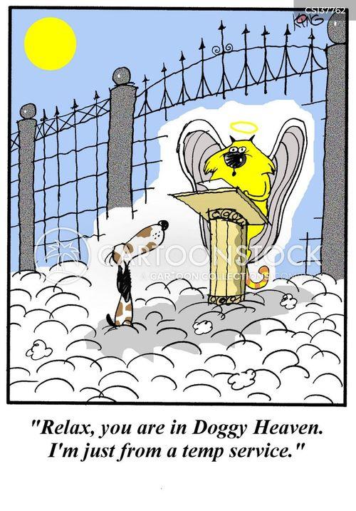 Funny pet death