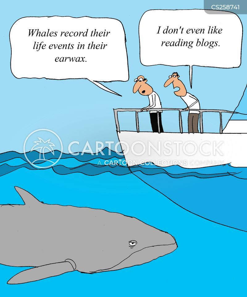 60957324 further Californiasealion1 besides 2 together with Bacura moreover Whale 129652. on blue whale cartoon