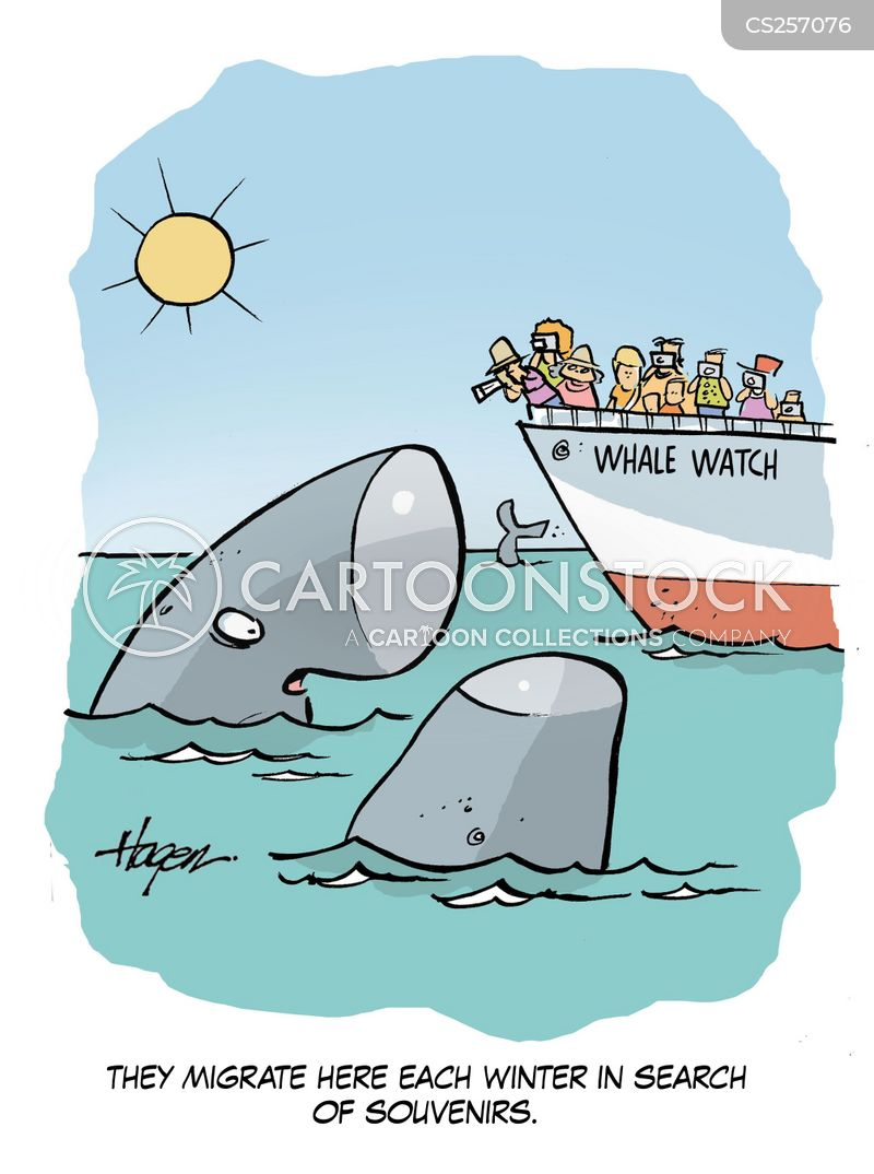 Whale Watch Cartoons And Comics Funny Pictures From