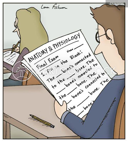 Funny anatomy words