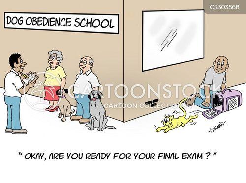 Dog Obedience Training Schools